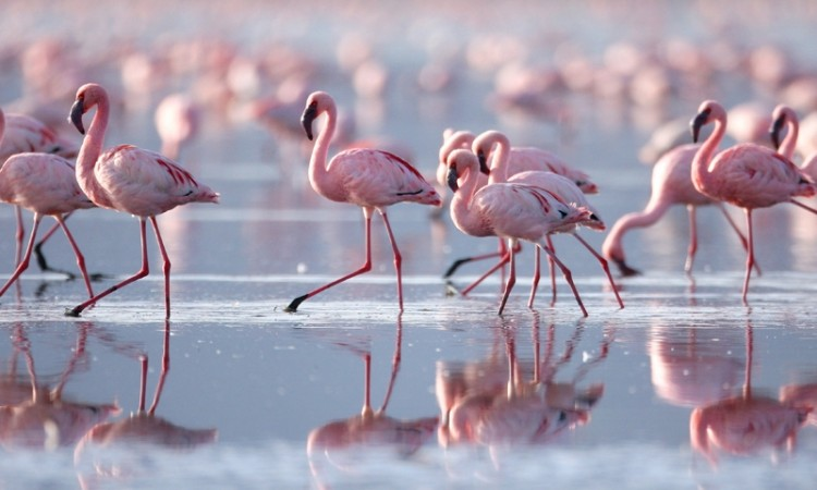 Bird Watching in The Algarve | Flamingos | bird watching | in the Algarve, Portugal