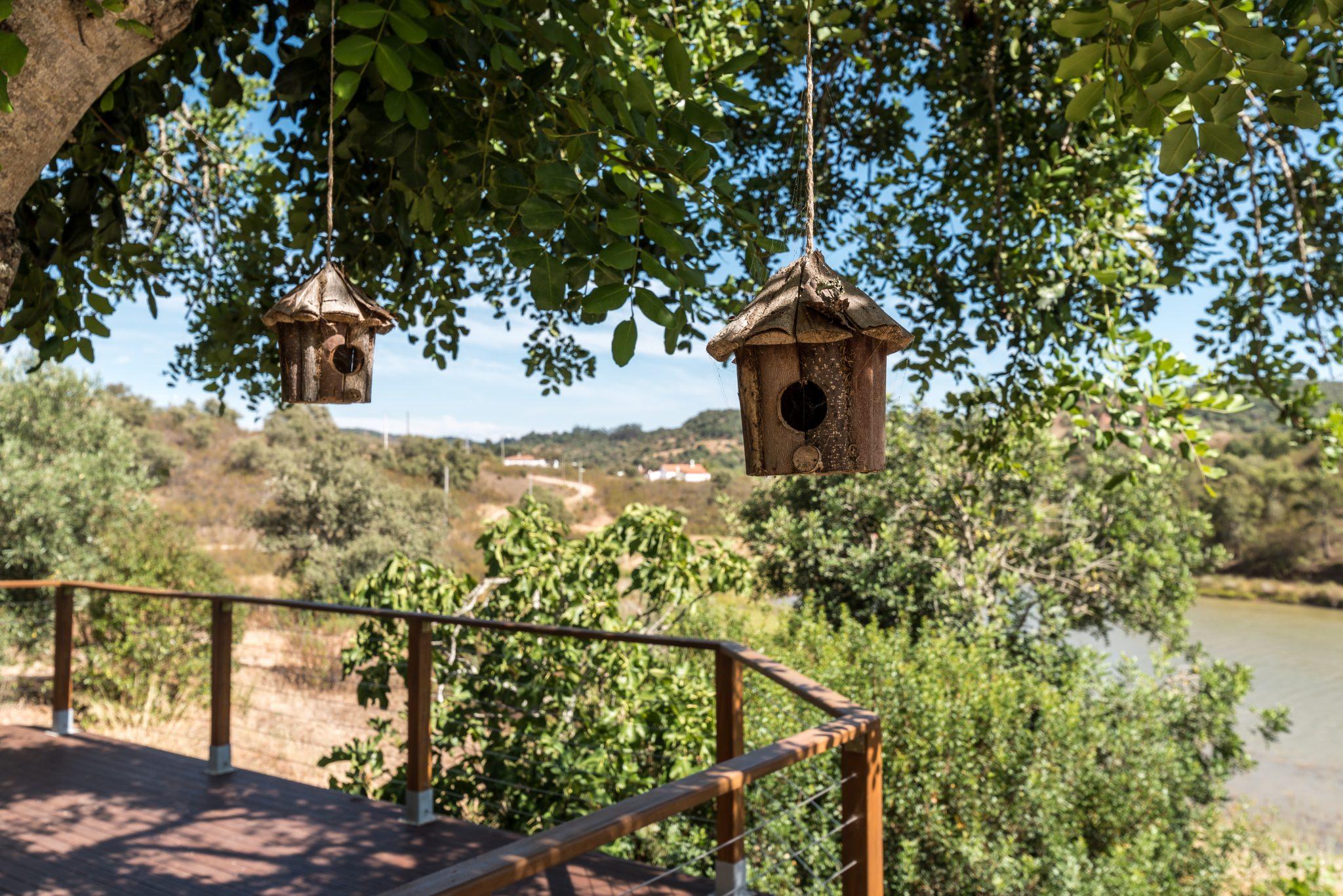 birdsong nature