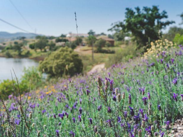 lavender Spring Algarve Portugal