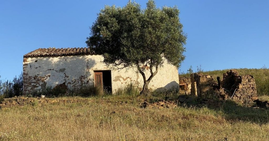 white algarve ruin with olive tree on the walk